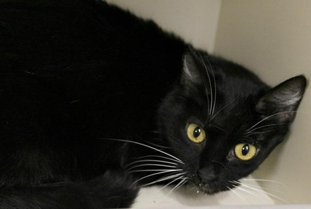 Cats For Adoption In Bloomington Indiana